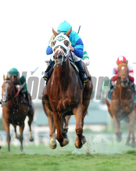 Baffle Me wins the South Beach Stakes.<br /> Coglianese Photos/Leslie Martin