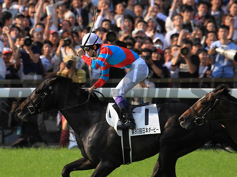 Kizuna after winning the 2013 Japanese Derby. <br /> Photo by: Naoji Inada