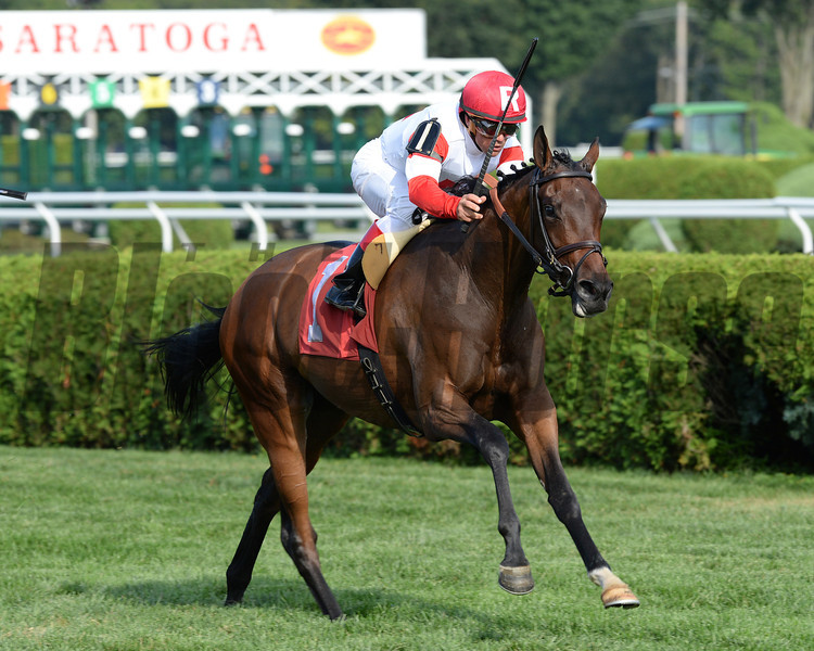 Granny Mc's Kitten wins the 2013 P. G. Johnson Stakes.<br /> Coglianese Photos