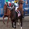 Verrazano Start Assistant Starter Down Wood Memorial