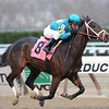 Comandante wins the 2013 NY Stallion Series - Thunder Rumble.<br /> Coglianese Photos