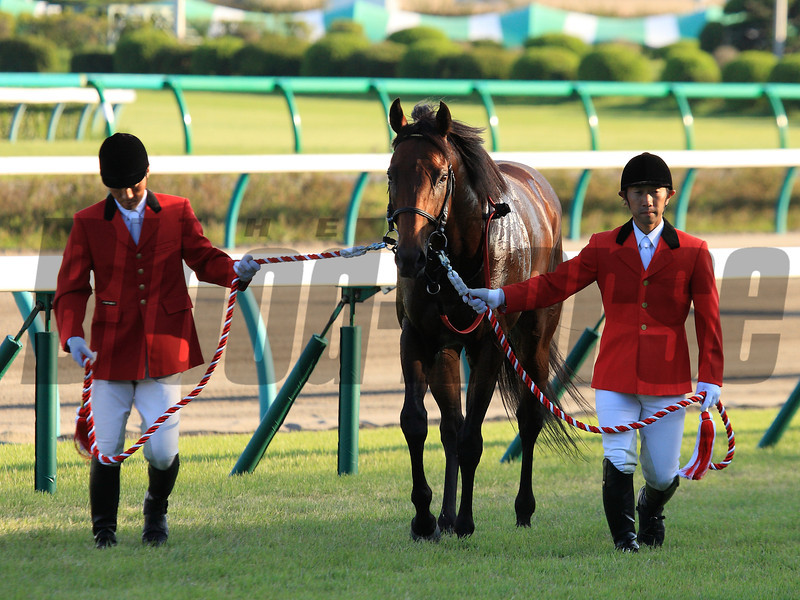 Lord Kanaloa wins the Spinsters Stakes Sept. 29, 2013 at Nakayama Racecourse.<br /> Naoji Inada Photo