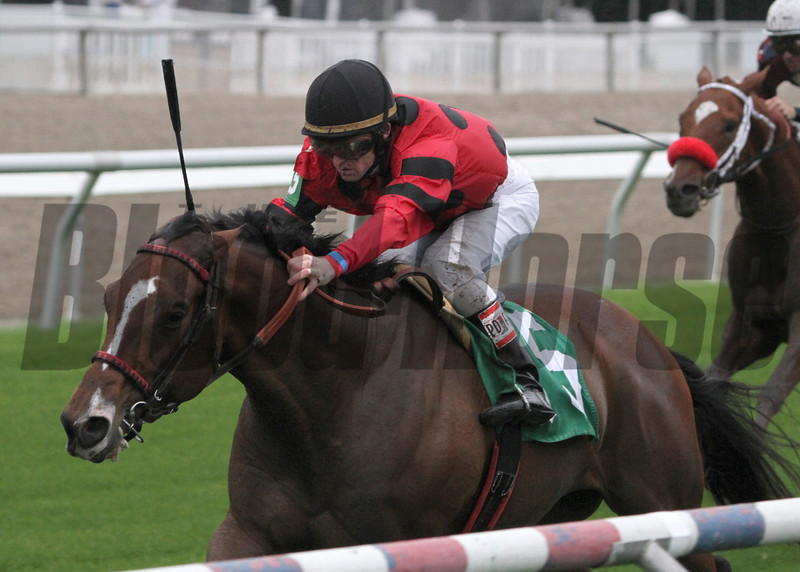 11/23/2013  -  String King with James Graham aboard captures the 7th running of the $60,000 Mr. Sulu Stakes over the Fair Grounds turf course.  <br /> Hodges Photography / Lynn Roberts