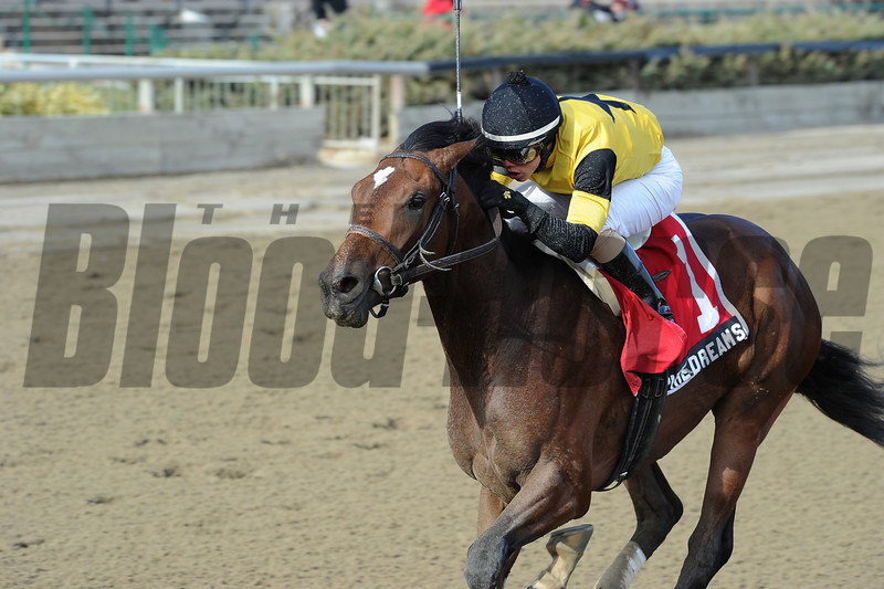 Empire Dreams wins the 2013 New York Stallion Series - Great White Way.<br /> Coglianese Photos