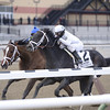 Revolutionary wins the 2013 Withers.<br /> Coglianese Photos/Joe Labozzetta