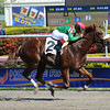 Cerro - Allowance win, January 26, 2013.<br /> Coglianese Photos