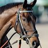 Royal Delta wins the Sabin Stakes.<br /> Photo by Coglianese Photos/Eleanor Gustafson
