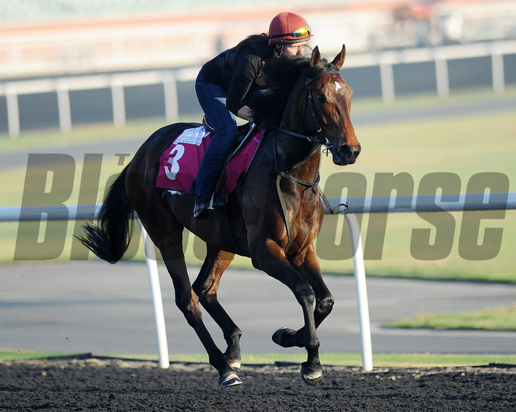 LInes of Battle; Meydan; March 29th; 2013; photo by Mathea Kelley; UAE Derby