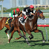 Point of Entry wins the 2013 Gulfstream Park Turf Handicap.<br /> Coglianese Photos