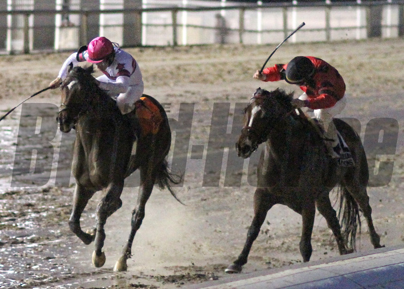 12/14/2014  -  Sunbean (left) with jockey Richard Eramia makes a late charge and noses out String King at the wire to capture the 23rd running of the$150,000  Louisiana Champions Day Classic at Fair Grounds.  Hodges Photography / Lynn Roberts
