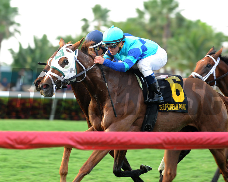 Baffle Me wins the South Beach Stakes.<br /> Coglianese Photos/Kenny Martin