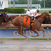 Storming Inti wins the 2013 Pulpit Stakes.<br /> Coglianese Photos/Lauren King