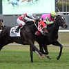 Effie Trinket wins the 2013 Ticonderoga Stakes.<br /> Coglianese Photos