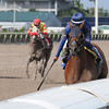 My Pal Chrisy wins the 2013 Millions Distaff Preview Stakes.<br /> Coglianese Photos