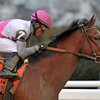 Vyjack, Joel Rosario up, wins the Gr3 Gotham Stakes at Aqueduct...<br /> © 2013 Rick Samuels/The Blood-Horse