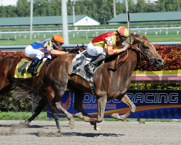 Private Ensign - Allowance win, January 25, 2013.<br /> Coglianese Photos/Courtney Heeney