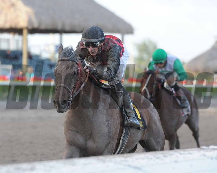 River Seven overcame a lack of experience on dirt to post a track-record win over a good field in the $100,000 Harlan's Holiday Stakes at odds of 12-1 Dec. 22 at Gulfstream Park.<br /> Coglianese Photos/Kenny Martin