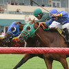 Backseat Memories/Grand Tito dead heat in 2013 Showing Up Stakes.<br /> Coglianese PhotosKenny Martin