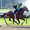 Palace Malice works 8/11/2013.<br /> Coglianese Photos