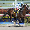 Verrazano - Allowance win, Gulfstream Park, February 2, 2013.<br /> Coglianese Photos/Courtney Heeney