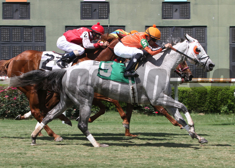 6/1/2013 - With a late charge Drinking Fund with Chris Rosier aboard captures the 34th running of the Honeymoon Stakes over the turf course at Louisiana Downs.  Divine Lorretta finished 2nd and Esther Carl was third.  Hodges Photography / Lou Hodges, Jr.