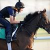 Royal Diamond, Meydan, March 28th, 2013, photo by Mathea Kelley, Dubai World Cup 2013, Dubai Sheema Classic