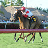 Deanaallen'skitten wins the 2013 Tiara Stakes.<br /> Coglianese Photos