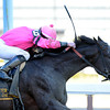 Swagger Jack wins the 113rd running of The Carter at Aqueduct in Ozone Park, N.Y. April 6, 2013.  Photo by Skip Dickstein