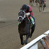 Cairo Prince wins the Nashua Stakes 11/3/2013.<br /> Coglianese Photos/JOE LABOZZETTA