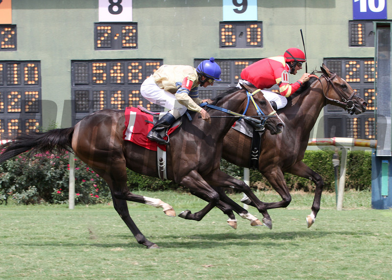 8/3/2013  -  Redgrass Cat with Lindey Wade aboard holds off jockey Don Simington and Thegirlinthatsong to win the 12 running of the Donnie Wilhite Memorial at Louisiana Downs.  Hodges Photography / Lou Hodges, Jr.