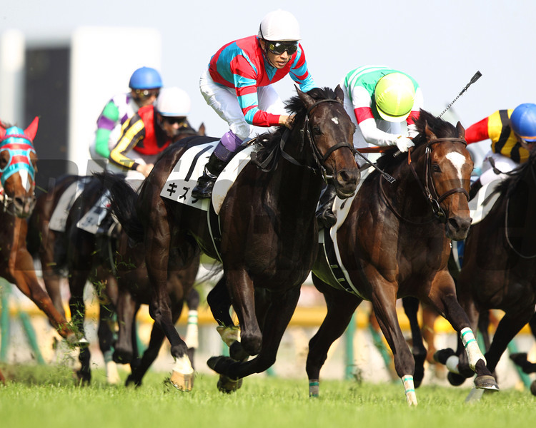 Race favorite Kizuna closed relentlessly from behind and snatched victory from Epiphaneia near the finish line in the $5.2 million Tokyo Yushun (Jpn-I), or Japanese Derby. <br /> Photo by: Masakazu Takahashi