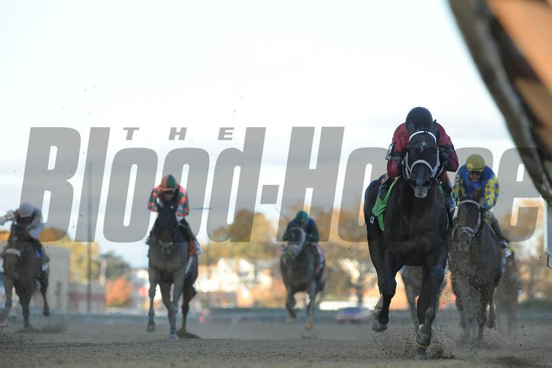 Cairo Prince wins the Nashua Stakes 11/3/2013.<br /> Coglianese Photos