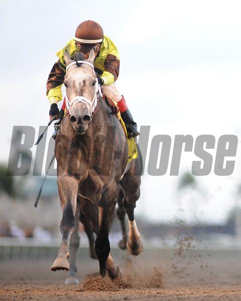Graydar wins the 2013 Donn Handicap.<br /> Coglianese Photos