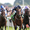 Racing from York 21/8/13 The Juddmonte International Stakes.<br /> Declaration of War (centre) wins from Trading Leather (right) with Al Kazeem (left).<br /> Trevor Jones Photo