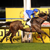 Sajjhaa winning in the Dubai Duty Free.<br /> Photo by Dave Harmon