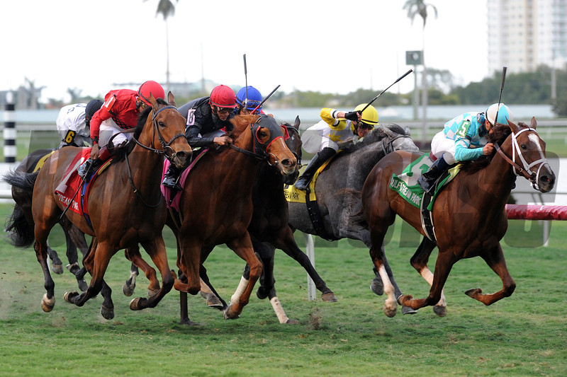 Channel Lady wins the 2013 Suwannee River Stakes.<br /> Coglianese Photos