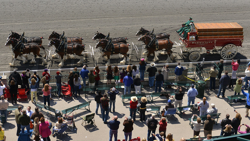 Budweiser Clydesdales, Keeneland Race Track, Lexington KY <br /> ©Photo by Mathea Kelley 4/20/13