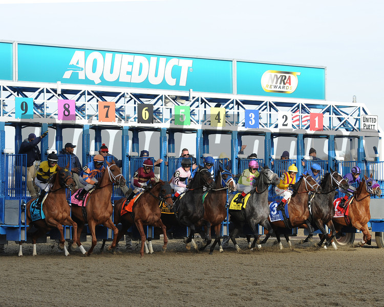 Wedding Toast wins the 64th running of The Comely at Aqueduct Nov. 30, 2013, in Ozone Park, N.Y<br /> Photo by: Adam Coglianese