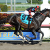 Cigar Street wins the 2013 Skip Away.<br /> Coglianese Photos/Leslie Martin