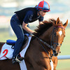 Animal Kingdom, Meydan, March 28th, 2013, photo by Mathea Kelley, Dubai World Cup 2013,