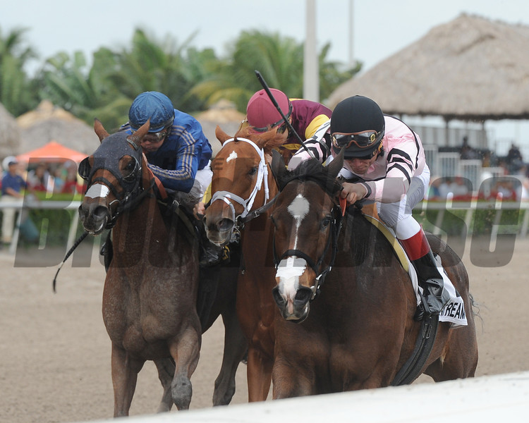 Devil's Cave wins the 2013 Ocala Stakes.<br /> Coglianese Photos/Kenny Martin