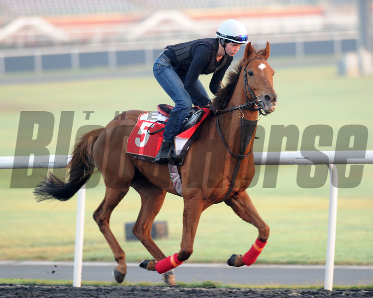 Seismos, Meydan, March 28th, 2013, photo by Mathea Kelley, Dubai World Cup 2013, Dubai Gold Cup