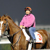 Dullahan, March 28th, 2013, photo by Mathea Kelley, Dubai World Cup 2013, Dubai World Cup;