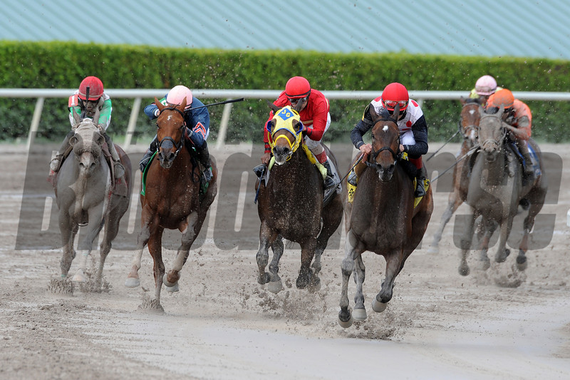 Successful Song captures The Florida Sunshine Millions Distaff at Gulfstream Park on 1/19/2013 with Joel Rosario up.<br /> Coglianese Photos/Eleanor Gustafson