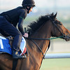Penitent, Meydan, March 28th, 2013, photo by Mathea Kelley, Dubai World Cup 2013, Goldolphin Mile