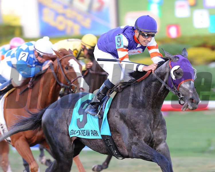 Mucho Mas Macho wins the 2013 Ft. Lauderdale Stakes.<br /> Coglianese Photos/Courtney Heeney