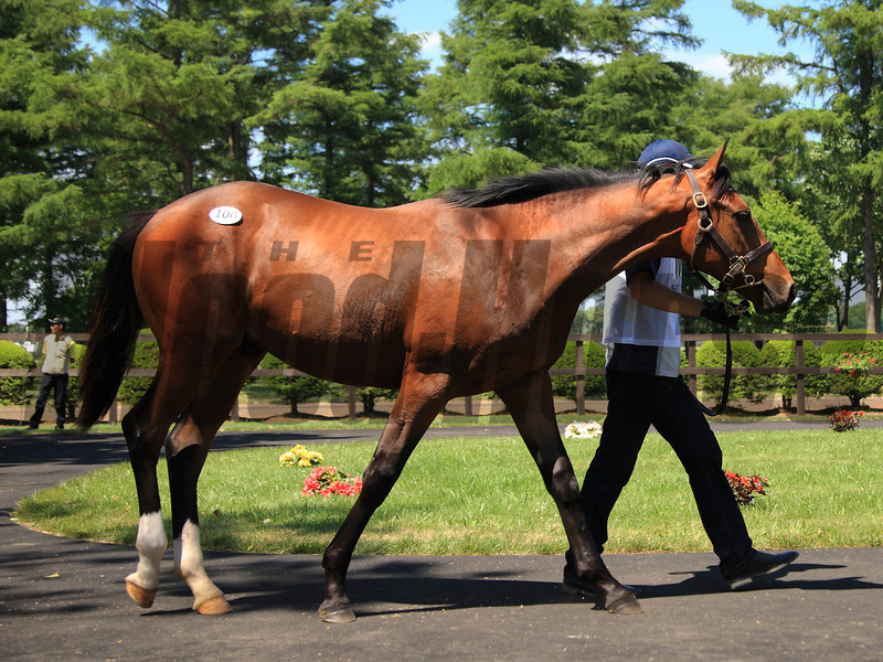 A colt by Deep Impact out of Shes All Eltish brought the overall highest price of ¥180,000,000 ($1,764,706) at the JRHA sale.<br /> Naoji Inada Photo
