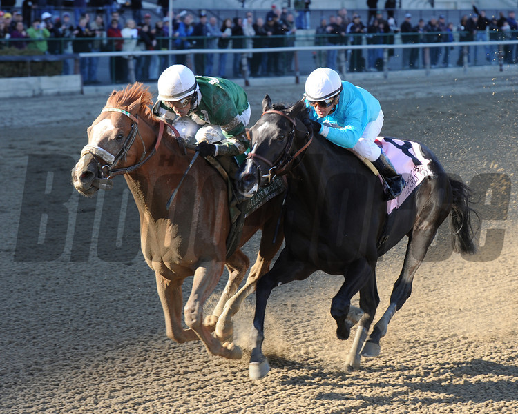 Declan's Warrior wins the 2013 Bay Shore.<br /> Coglianese Photos/Chelsea Durand