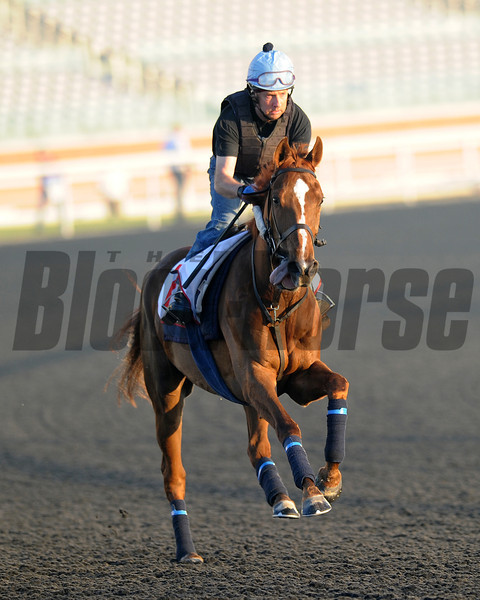 Red Cadaeux; Meydan; March 29th; 2013; photo by Mathea Kelley; Dubai World Cup 2013;