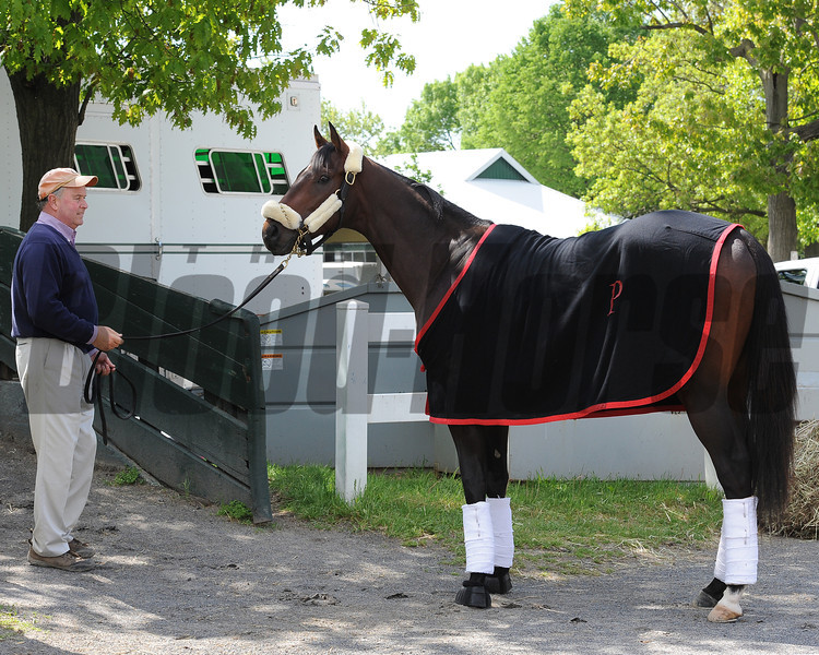 Orb ships from Belmont Park to Pimlico for the 2013 Preakness Stakes.<br /> Photo by: Adam Coglianese/NYRA